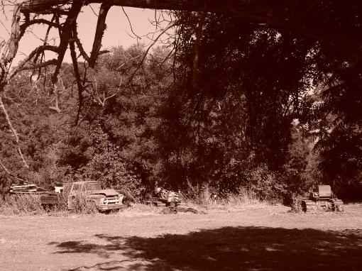 Further up Alamo Pintado Road, 31 May 2010