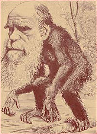 Darwin Cartoon